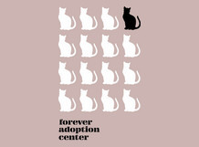Forever Adoption Center